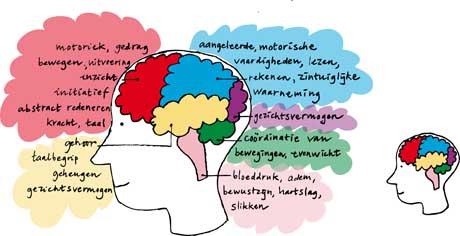 hersenen dementie